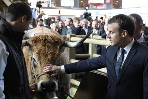 Emmanuel Macron caresse une vache au salon de l'Agriculture, le 24 février 2018 à Paris.