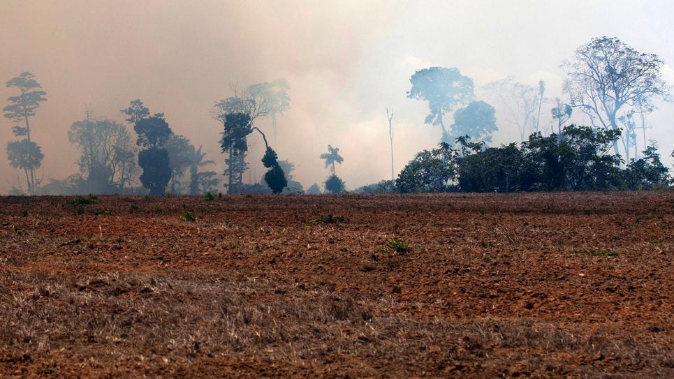 Un nuage de fumée enveloppe des arbres de la forêt amazonienne, le 24 août 2019 près de Novo Progresso, dans le centre du Brésil