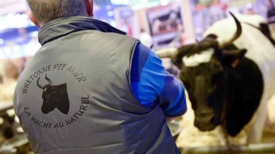 Un éleveur regarde sa vache pie noir durant le 52e Salon de l'agriculture à Paris, le 26 février 2015