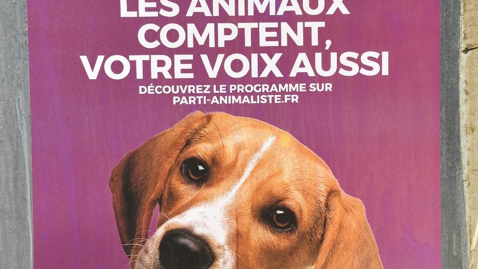 Une affiche du parti animaliste pour les élections européennes, le 15 mai 2019 à Montpellier