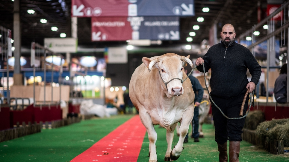 Un fermier conduit sa vache entre les stands du Salon de l'agriculture, le 21 février 2020 à la Porte de Versailles, à Paris