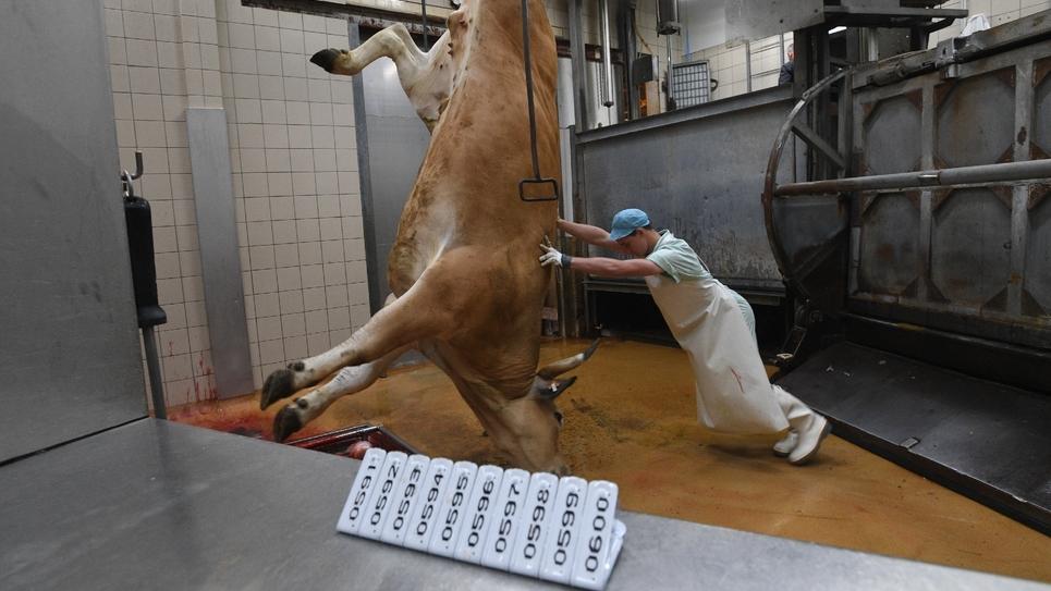 Un employé de l'abattoir de Surgères, le 20 juin 2016.
