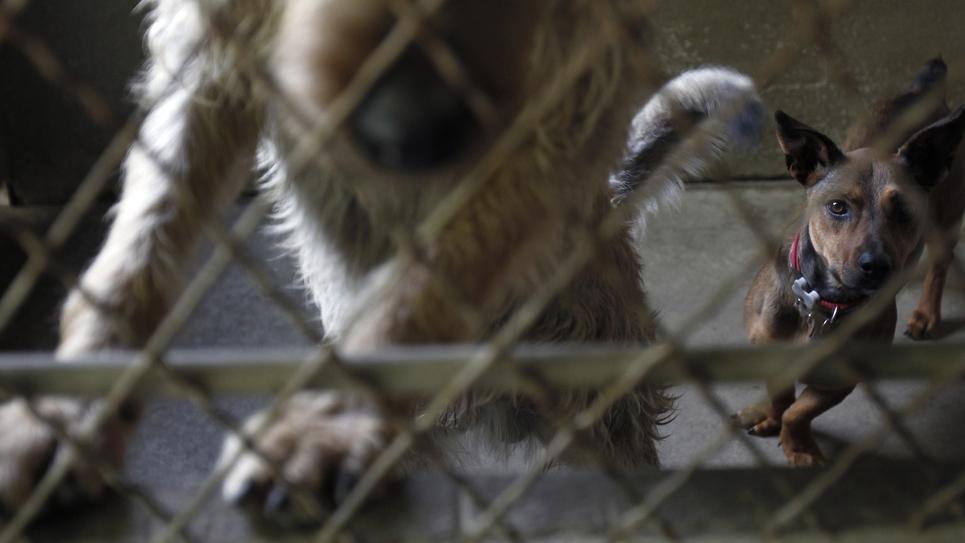 """Des chiens abandonnés recueillis dans le refuge """"Animaux sans foyer"""", à Montgeron dans l'Essonne le 14 août 2010"""