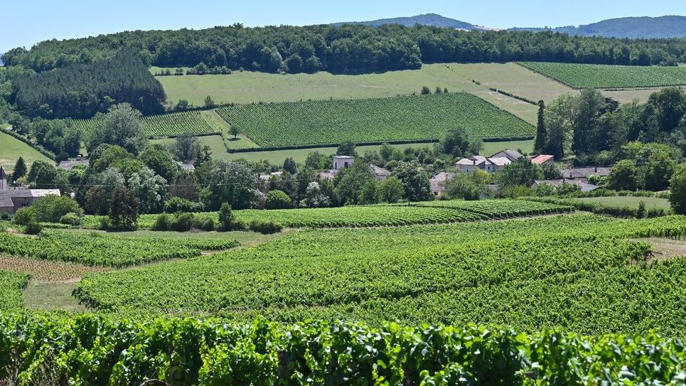 Le village de Chardonnay entouré de vignobles le 10 juillet 2019