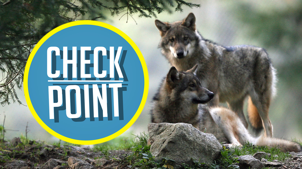 Check Point banner loup