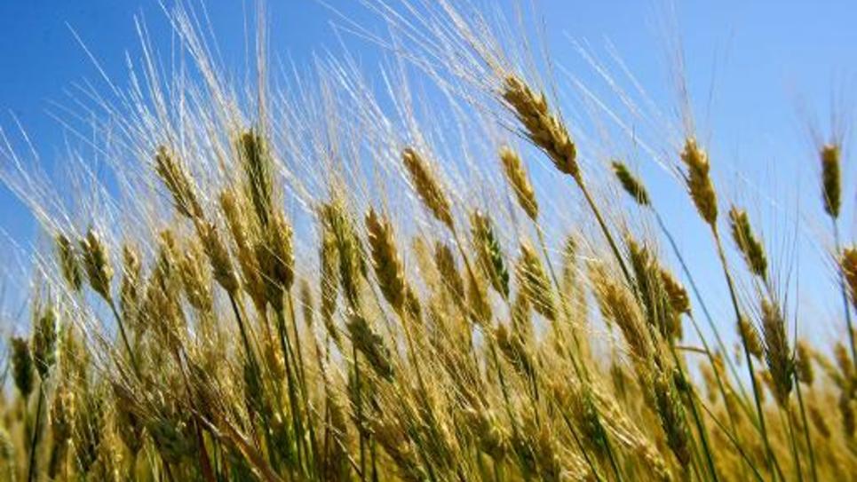 Le Sénat commence à modifier le projet de loi destiné à donner une orientation plus écologique au secteur de l'agriculture