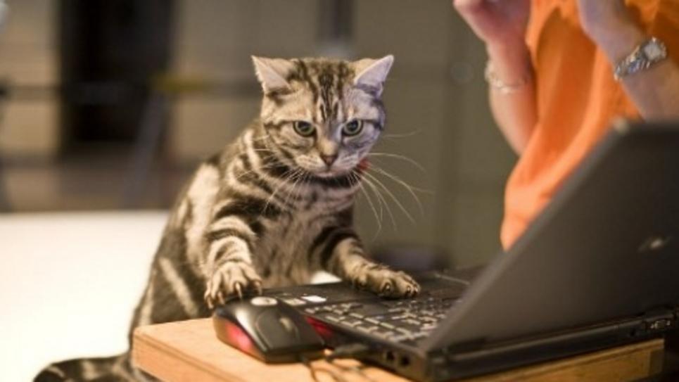 Chat ordinateur