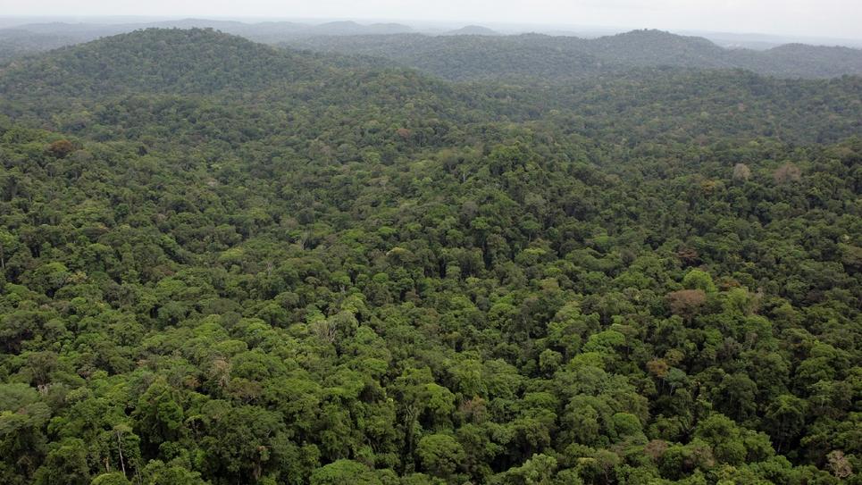 Vue de la forêt de Guyane française, sur la commune de Saül, le 20 octobre 2006