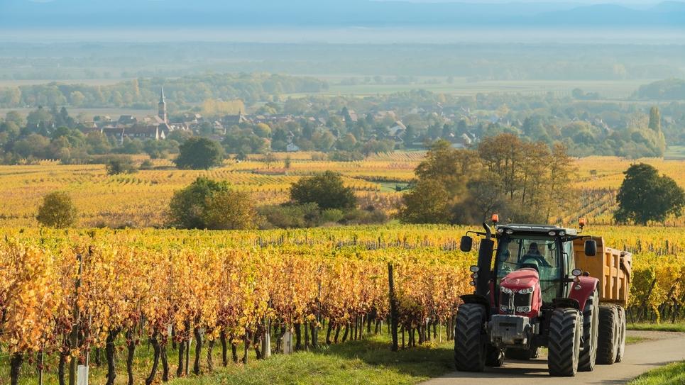 Un tracteur passe le long d'un champ de vignes à Heiligenstein, dans le Bas-Rhin, le 18 octobre 2017