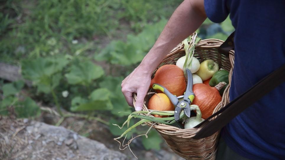 Illustration jardin potager en agriculture biologique
