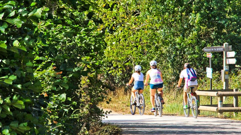 Trois cyclistes en campagne