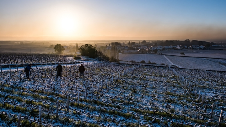 Burgundy vineyard:candles against the frost