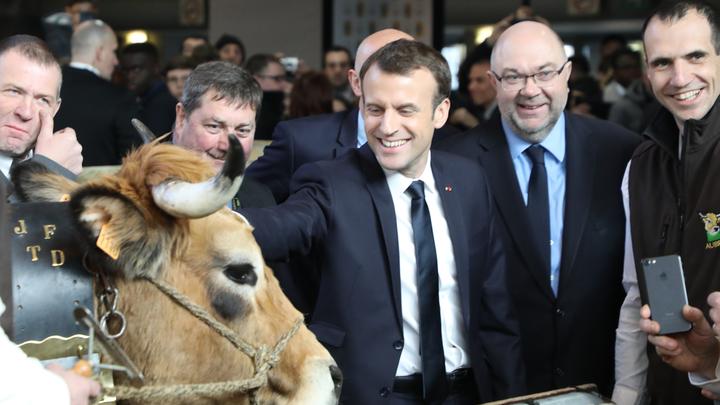 Emmanuel Macron aux côtés de Haute, la vache Aubrac, égérie du Salon de l'Agriculture