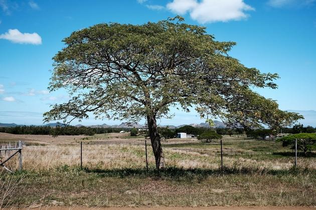 Photo prise sur la propriété de Gérard Pasco, nouveau président de la Chambre d'agriculture de Nouvelle-Calédonie