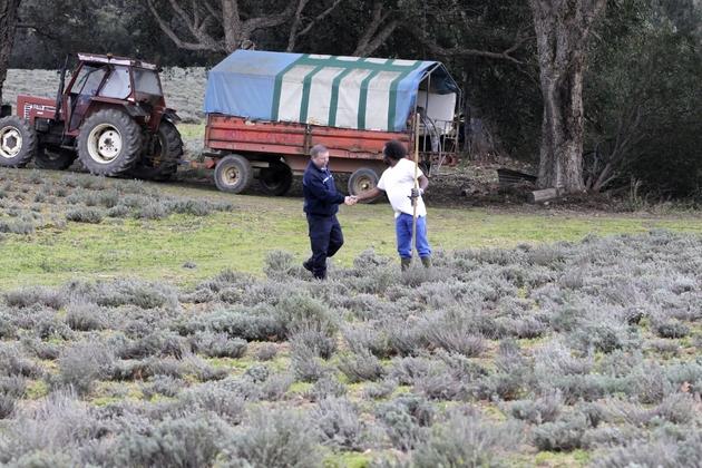 Sur cette photographie prise le 9 février 2018, un détenu serre la main d'un gardien alors qu'il cultive -en agriculture biologique- des olives et des immortelles -petites fleurs à l'odeur épicée