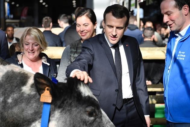 Emmanuel Macron caresse une vache lors de sa visite au salon de l'Agriculture à Paris, le 23 février 2019