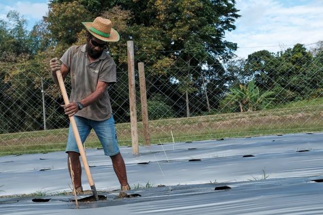 Augustin Hidele de la tribu Wagap travaille sur une parcelle mise à la disposition de projets de recherche agronomique, à Poindimie