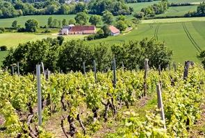 Vignoble dans le Sud Sarthe